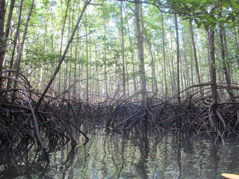 Bosque de Manglares de Thung Yee Pheng