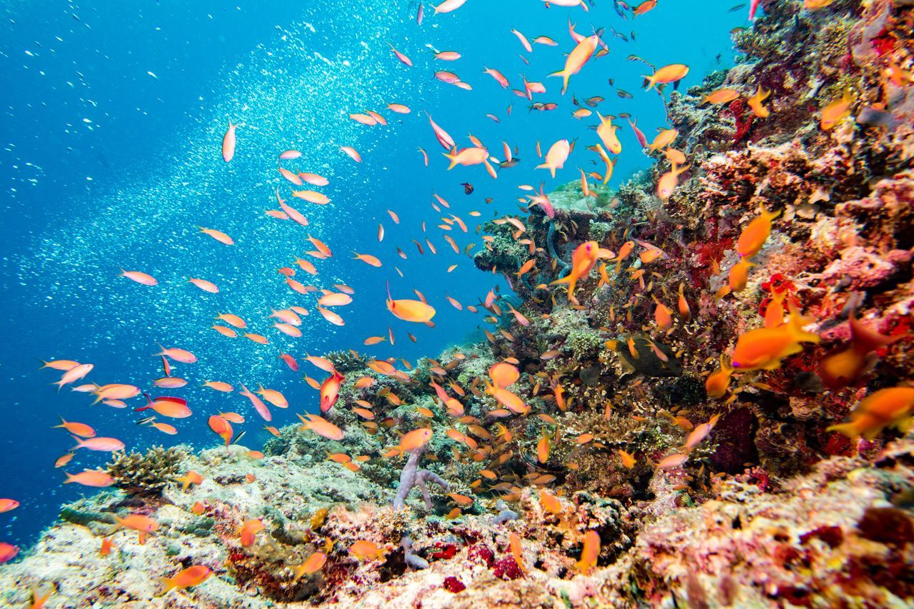 Buen lugar para el snorkel