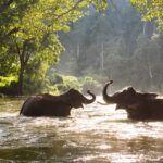 Montando Elefantes En Tailandia, ¿Qué Es Lo Importante?