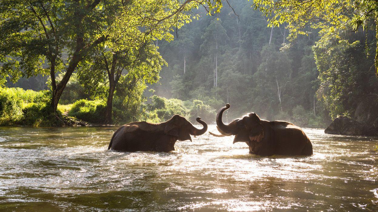 Elephant en Tailandia
