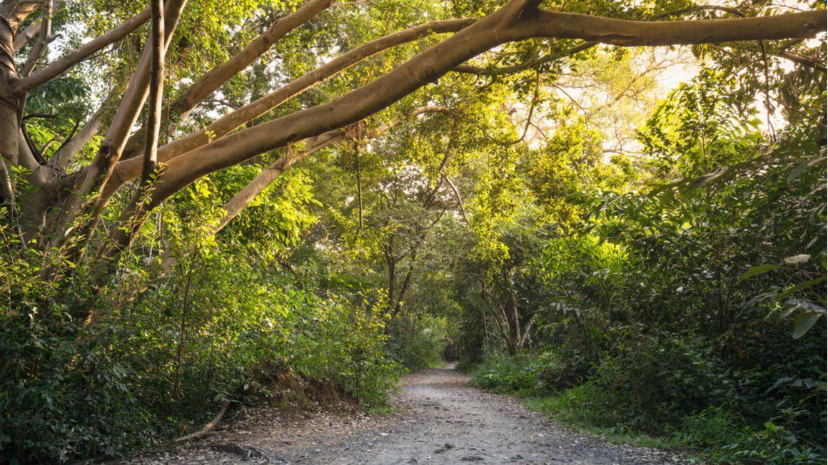 Nature Trail Hike