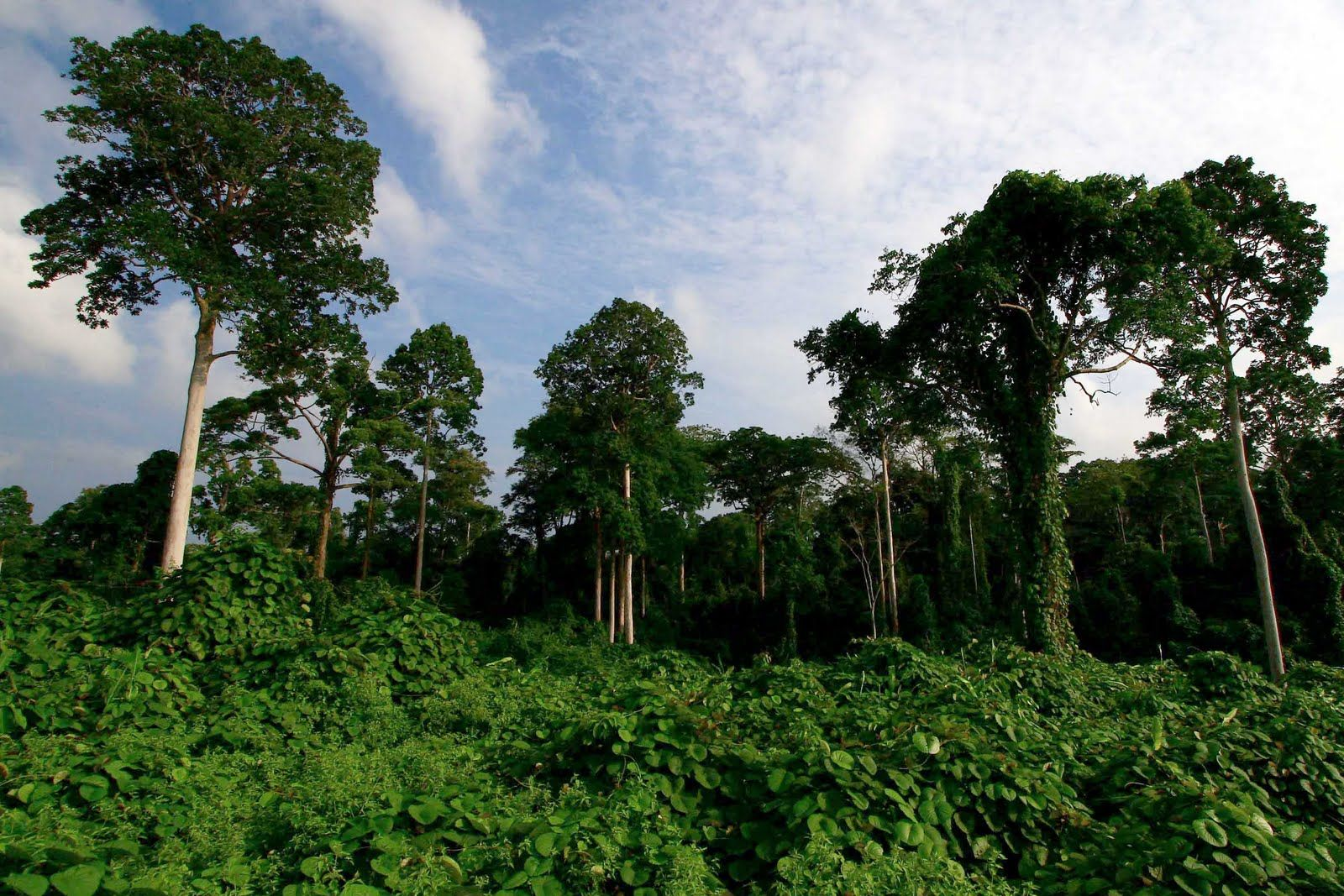 Selva en Sumatra