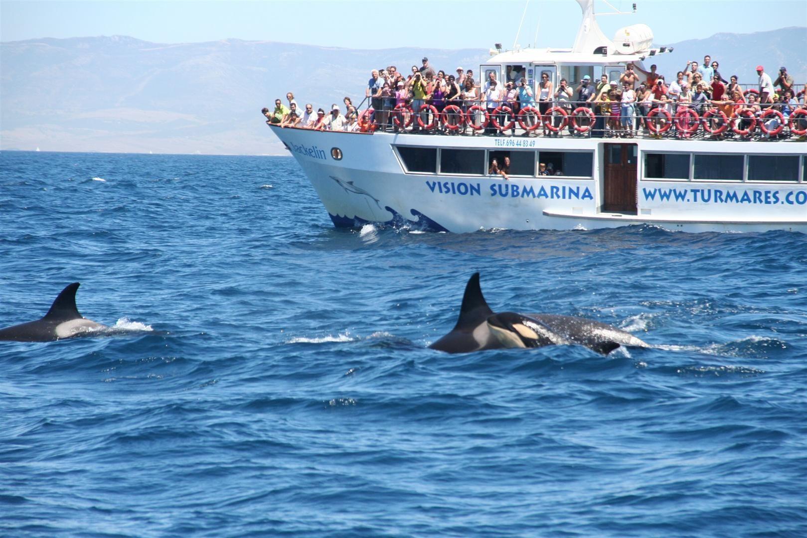 Avistamiento de ballenas en Tarifa
