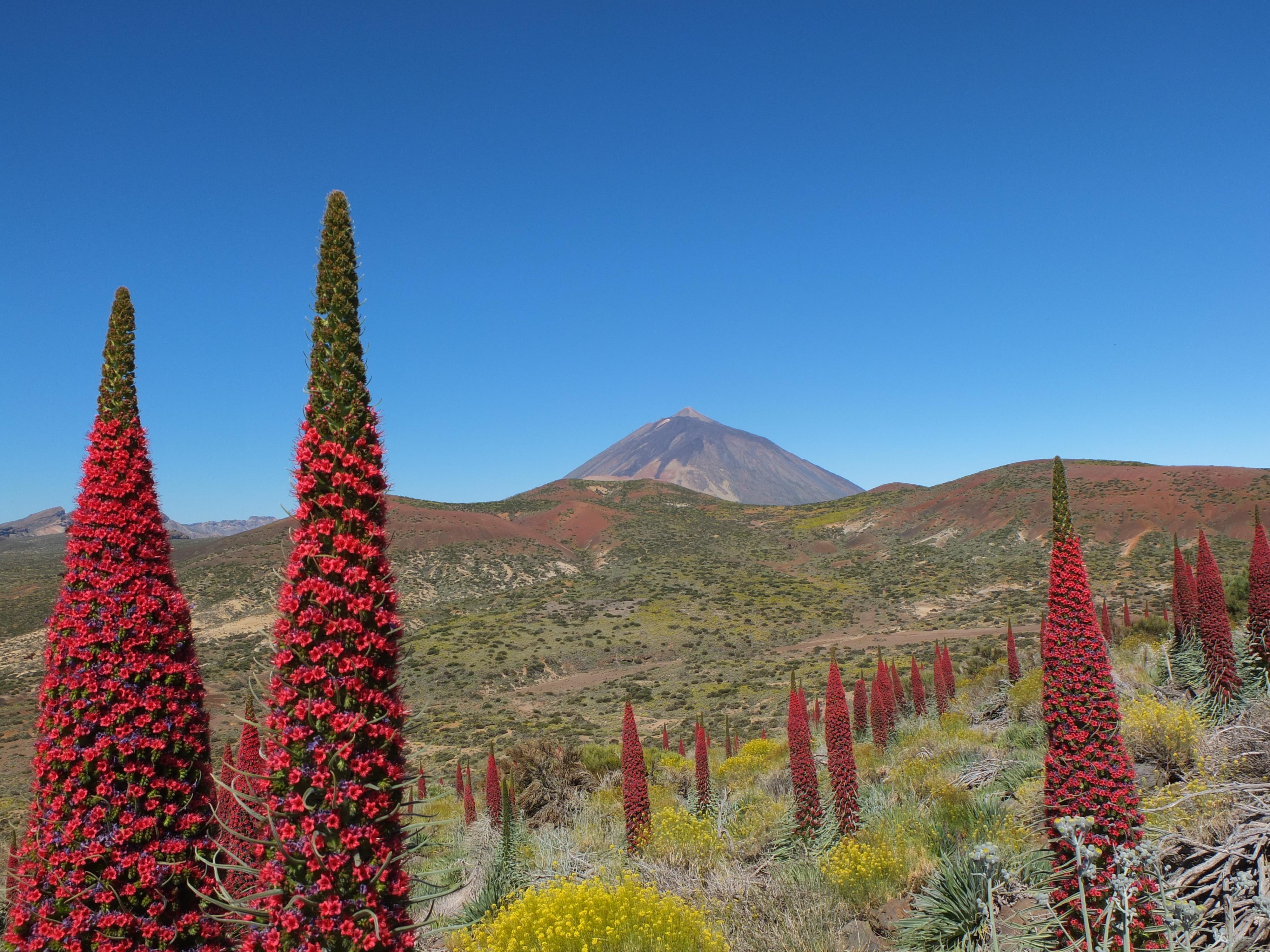 Parque Nacional de las Canadas del Teide