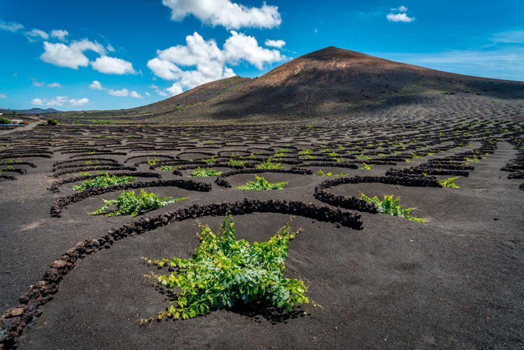 Volcanes y las bodegas de Lanzarote