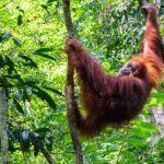 Las Mejores Cosas Para Ver En Sumatra