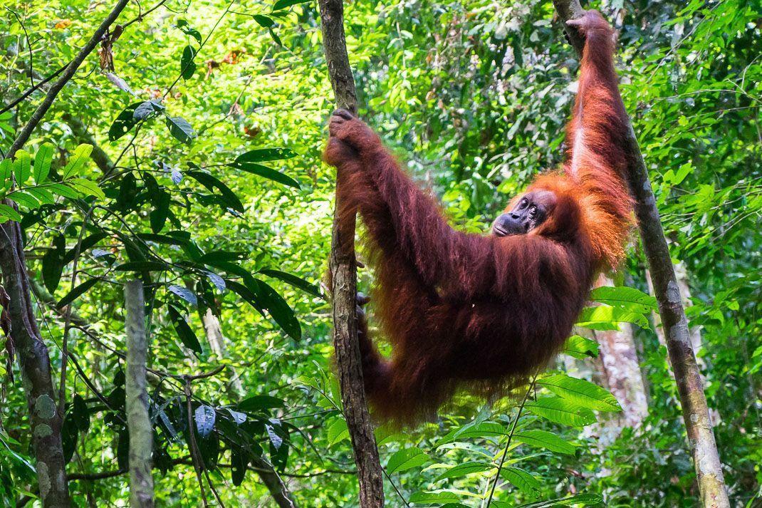 Selva de Bukit Lawang