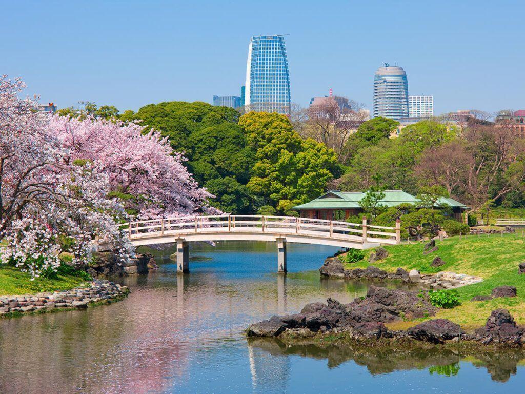 Cosas Que Hacer En Tokio 2