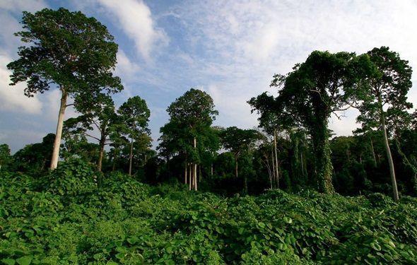 Isla  Sumatra
