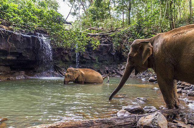 Elefantes del Proyecto Mondulkiri