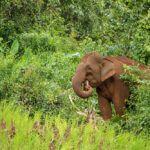 Proyecto Elefantes Mondulkiri