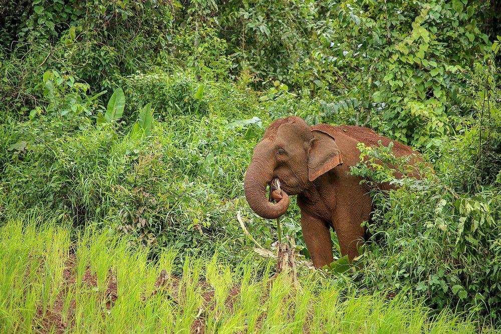 Proyecto Elefantes Mondulkiri 2