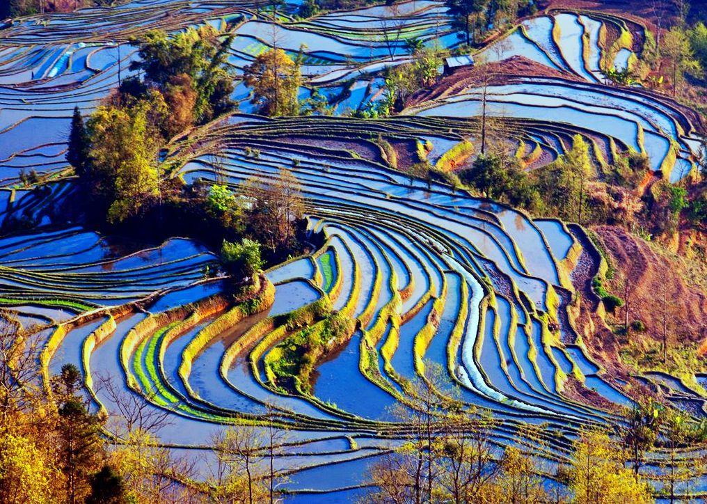 Terrazas de arroz de YunYang