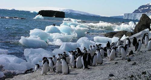 Islas subantárticas